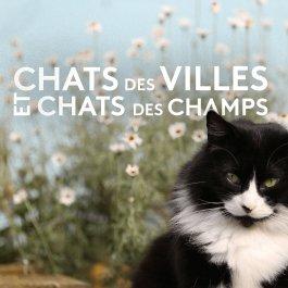 Chats des villes et chats des champs , Tous les épisodes en streaming ,  france.tv