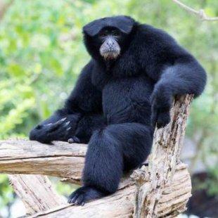 une saison au zoo saison 1 en streaming sur pluzz. Black Bedroom Furniture Sets. Home Design Ideas
