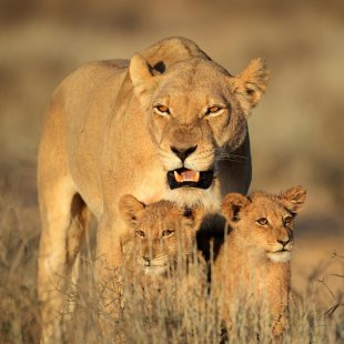 Afrique sauvage - image