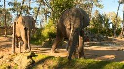 Une saison au zoo du 08/05