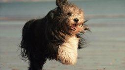 Rediffusion L'odyssée des chiens en streaming