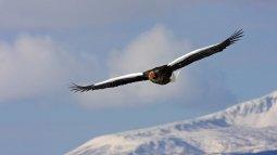 L'envol de l'oiseau en streaming
