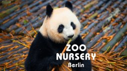 Zoo nursery : berlin du 18/04