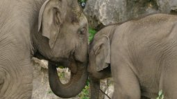 La vie secrète du zoo du 28/09