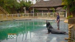 Une saison au zoo du 04/05