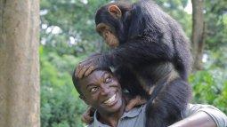 L'odyssée des primates du 15/04