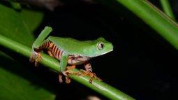 Histoires de grenouilles en streaming