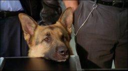 Rex, chien flic du 13/04