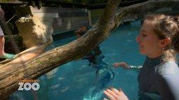 Une saison au zoo du 17/09