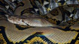 Les secrets des serpents du 06/04