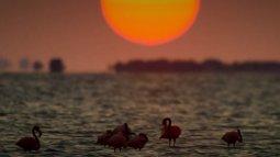 Les secrets de la mangrove en streaming