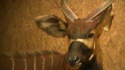 Une saison au zoo du 23/09