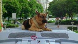 Rex, chien flic du 15/04