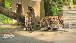 Une saison au zoo du 20/09