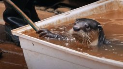 Refuges pour animaux sauvages en streaming