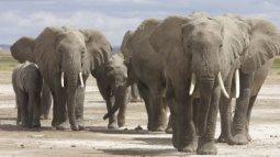 Une vie pour les éléphants du 05/04