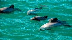 Dans les eaux bleues de nouvelle-zélande en streaming