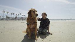 Dans la vie d'un chien en streaming