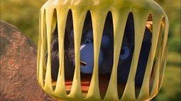 Les as de la jungle - à la rescousse! du 05/04