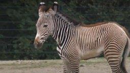 Zoo nursery : berlin du 20/04