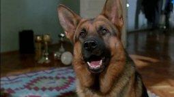 Rex, chien flic en streaming