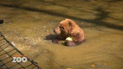 Une saison au zoo du 11/05
