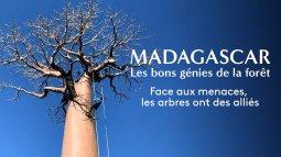 Madagascar - les bons génies de la forêt en streaming