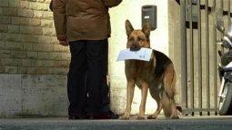 Rediffusion Rex, chien flic en streaming