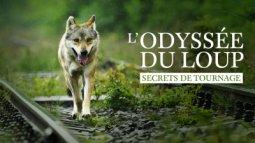 L'odyssée du loup : secrets de tournage en streaming
