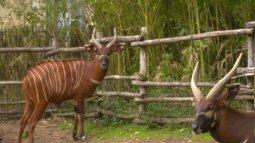 Une saison au zoo du 01/02