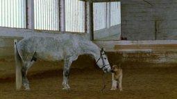 Rex, chien flic du 14/04