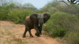 La famille éléphant et moi en streaming
