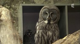 Zoo nursery : berlin du 26/04