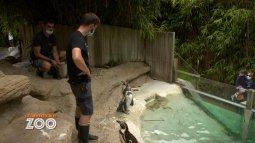 Une saison au zoo du 21/09