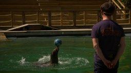 Une saison au zoo en streaming