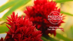 Passion outremer en streaming
