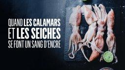 Quand les calamars et les seiches se font un sang d'encre du 12/10