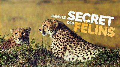 france 2 replay felins