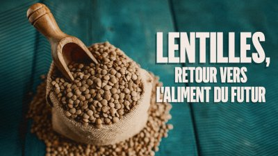 Image result for Lentilles, retour vers l'aliment du futur