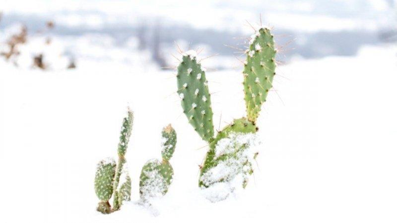 Des plantes exotiques qui ne craignent pas le froid france 2 24 01 2018 - Plantes qui ne craignent pas le gel ...