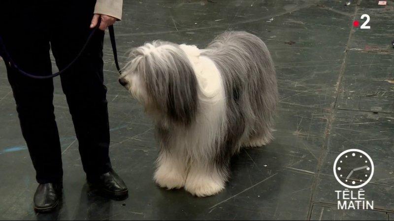 Sans fronti res londres un salon qui a du chien for Salon du chien
