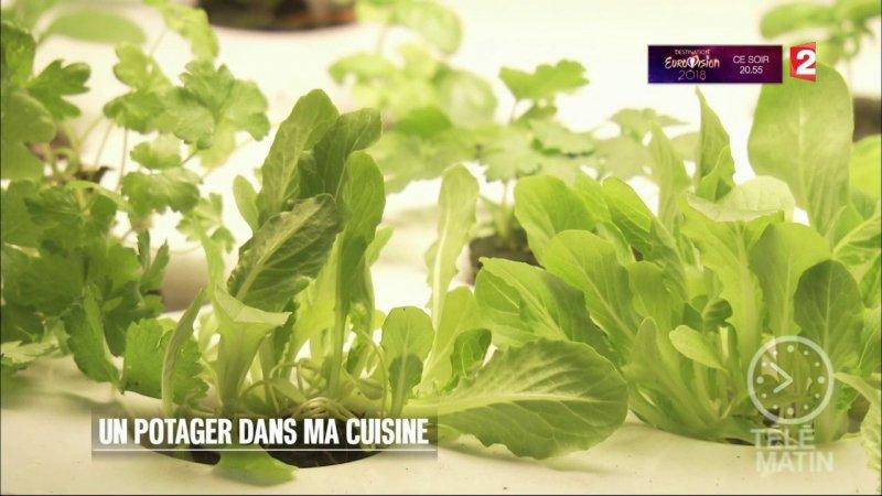 Replay t l matin t l matin jardin un potager dans ma - Recette de cuisine tele matin france2 ...